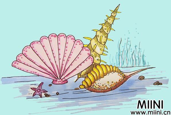 贝壳简笔画怎么画?贝壳简笔画步骤教程