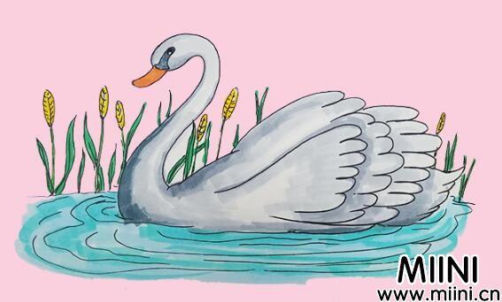 漂亮的天鹅简笔画步骤教程