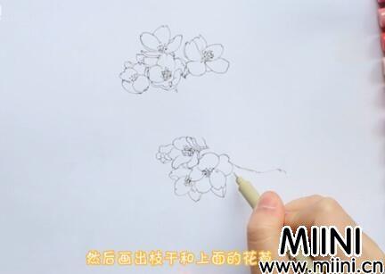 樱花画法怎么画?樱花画法步骤教程