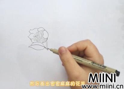 含笑花画法怎么画?含笑花画法步骤教程