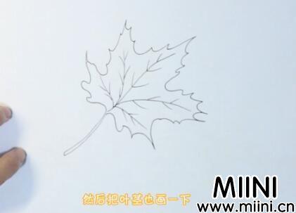枫叶简笔画怎么画?枫叶简笔画步骤教程
