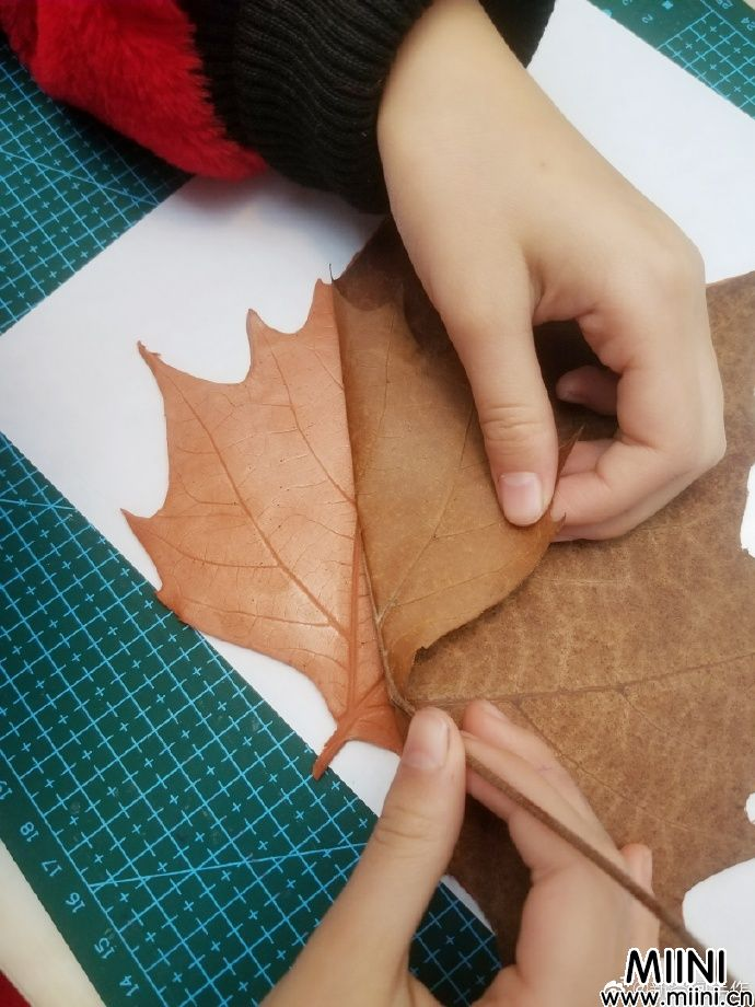 创意枫叶枫叶盘子的做法
