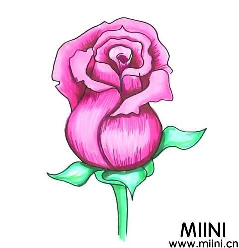 漂亮的粉玫瑰怎么<a href=http://www.miini.cn/hhds/ target=_blank class=infotextkey>画</a>?画粉玫瑰的步骤