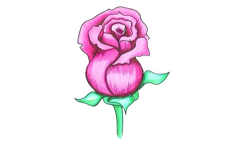 漂亮的粉玫瑰花怎么画