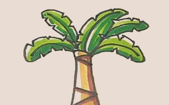 芭蕉树简笔画步骤图解
