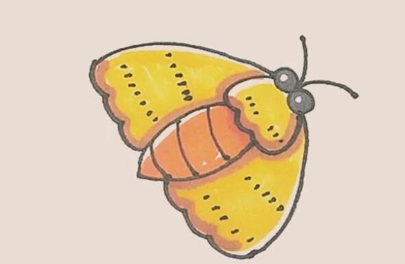 大飞蛾子简笔画步骤图解