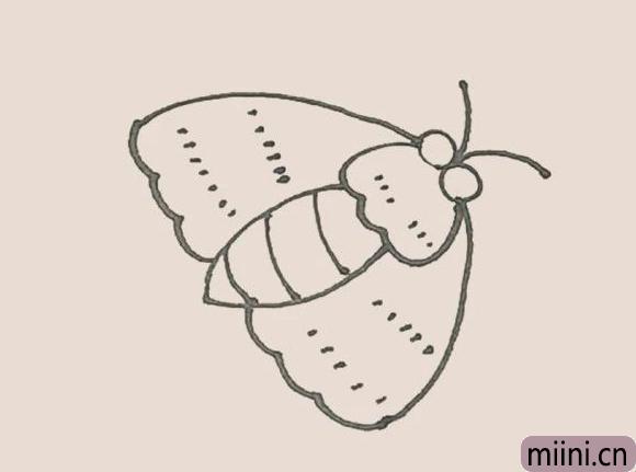 简笔画之飞蛾