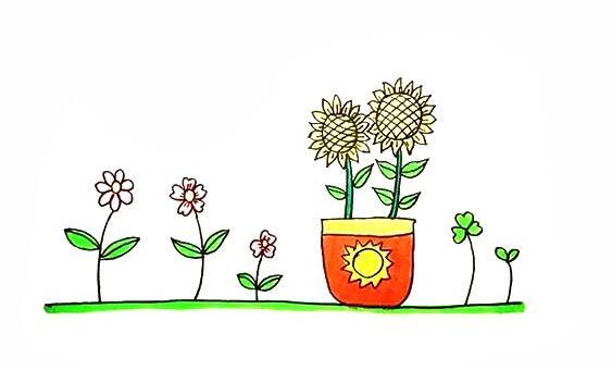向日癸盆栽的画法