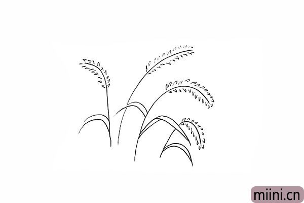 8.再画一棵生长不同方向的狗尾草。