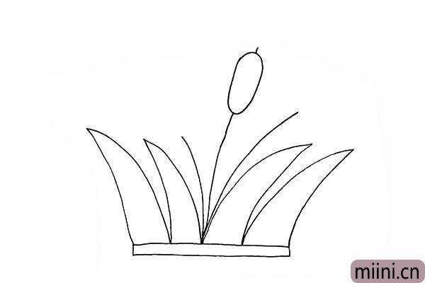 5.画出芦苇花是一个长长的椭圆状。
