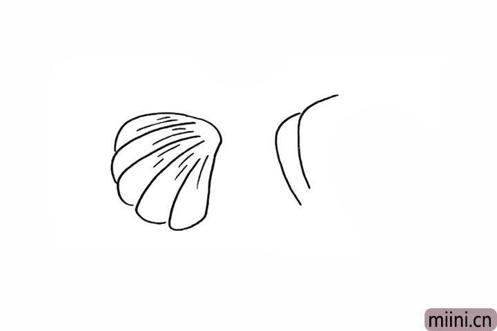 5.我们在画出另一个贝壳。