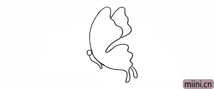 4.画出蝴蝶的身体和头部。