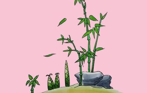 竹子画法步骤教程