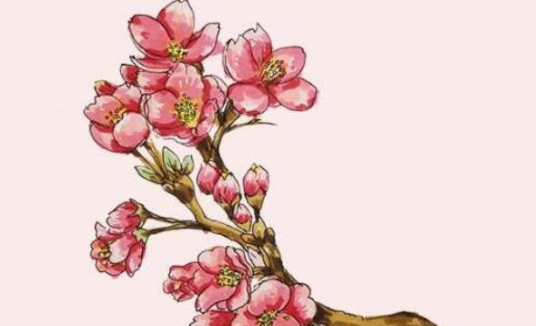 樱花简笔画步骤图解