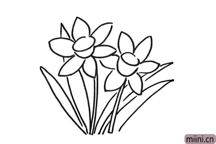 5.画水仙花的叶子。
