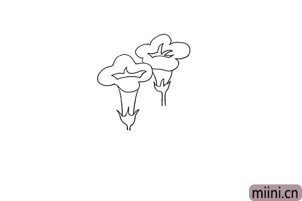 4.用同样的方法画出另外一朵牵牛花。