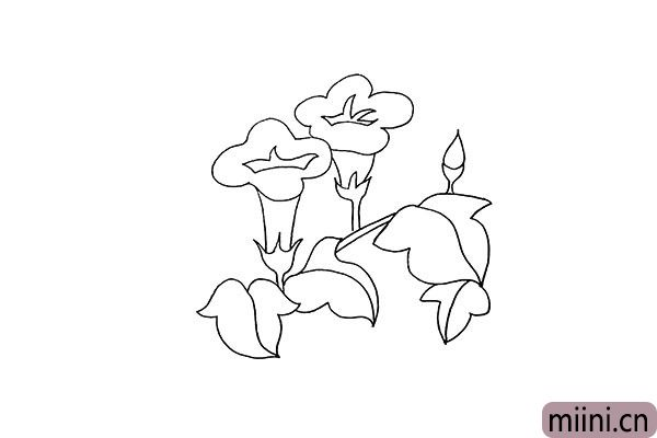 6.注意叶子的形状以及叶子的纹理。