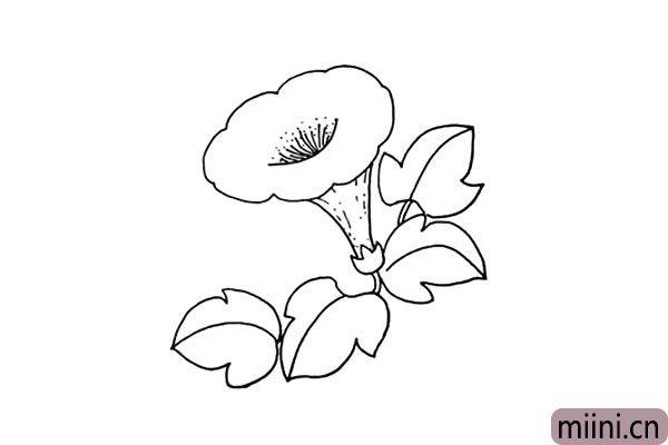7.在花蒂的下面画上叶子.注意叶子的形状和大小。