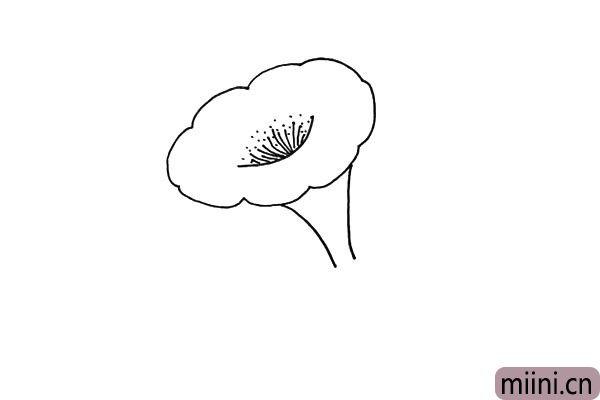 4.接着在凹进去的地方画上喇叭花的花蕊。