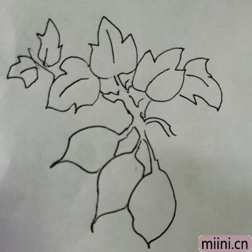 简笔画红薯10.jpg
