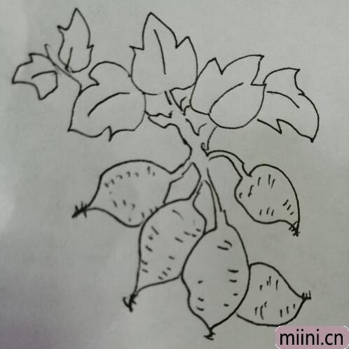简笔画红薯16.jpg