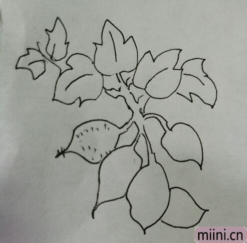 简笔画红薯13.jpg