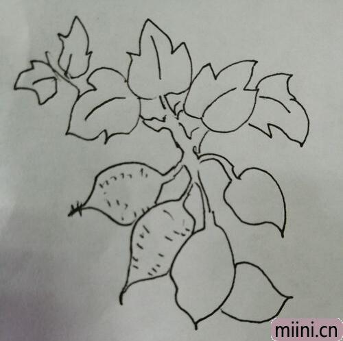 简笔画红薯14.jpg