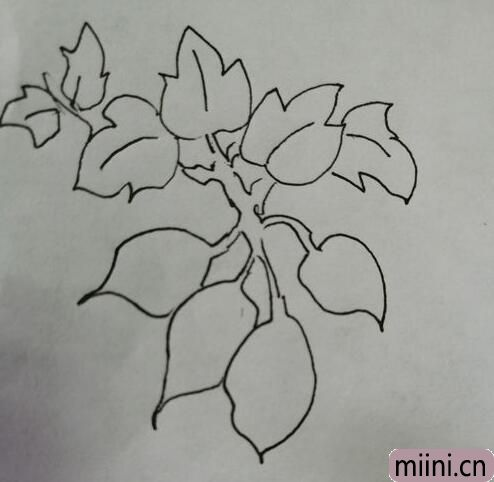 简笔画红薯11.jpg
