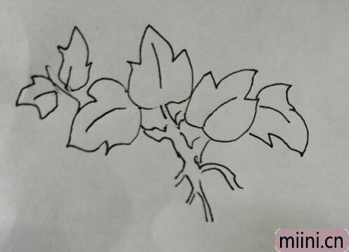 简笔画红薯08.jpg