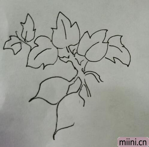 简笔画红薯09.jpg