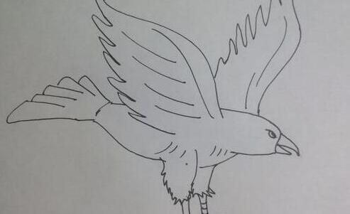 卡通版老鹰简笔画步骤教程
