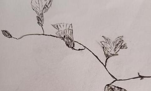 春天到了,画一个万树长嫩芽