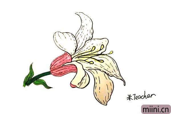 11.最后我们把画好的百合花涂上漂亮的颜色吧。