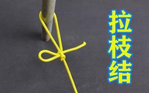 拉枝结的打法,果农们用此绳结拉枝,简单快捷不伤树