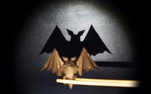 折纸蝙蝠,新型冠状病毒肺炎携带者,大家请闭之