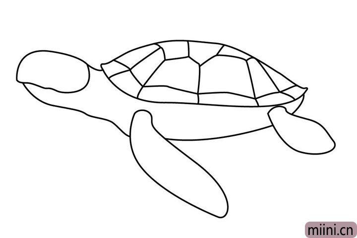 5.再画海龟灵活的四肢。
