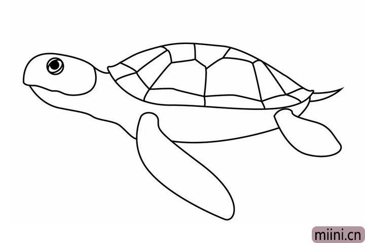 6.给海龟添加眼睛和尾巴~ 一只栩栩如生的海龟就诞生啦!