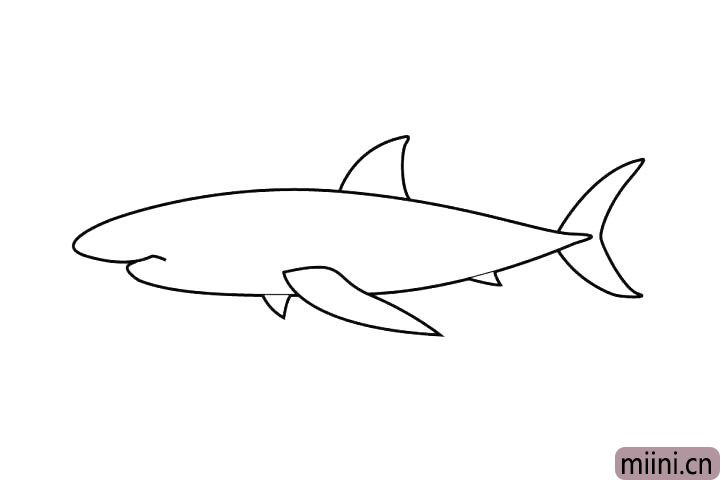 5.下面还有两个尖尖的鱼鳍!