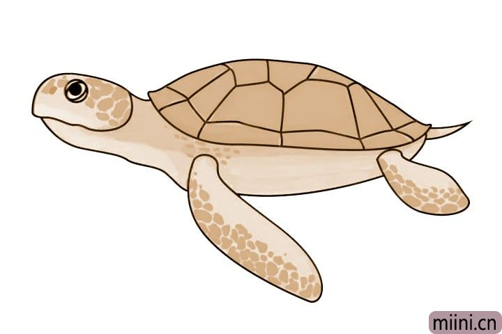7.最后让我们给海龟上色吧!