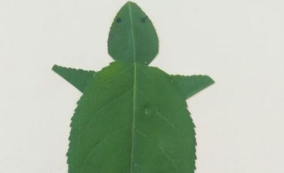 做一幅很可爱的小乌龟,亲子手工树叶贴画步骤教程