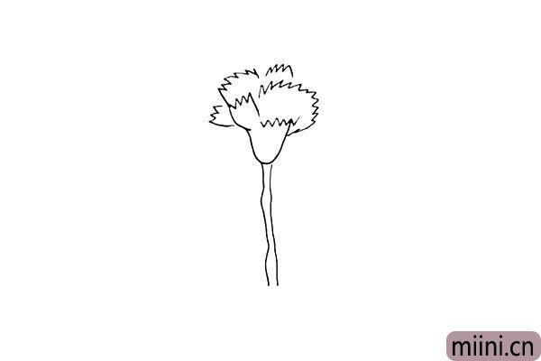 第四步:画出它的茎.花茎要画出几个凸起的部位。