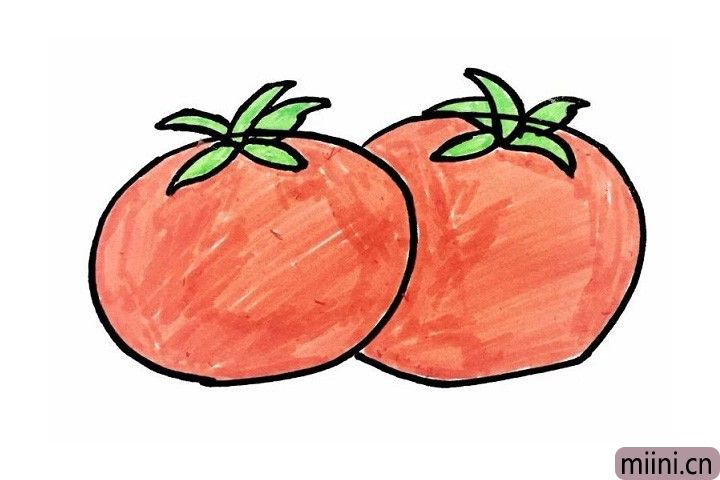红红的好吃西红柿简笔画步骤教程