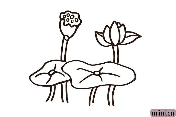 6.绕过荷叶画一朵莲子.仔细观察莲子的画法。