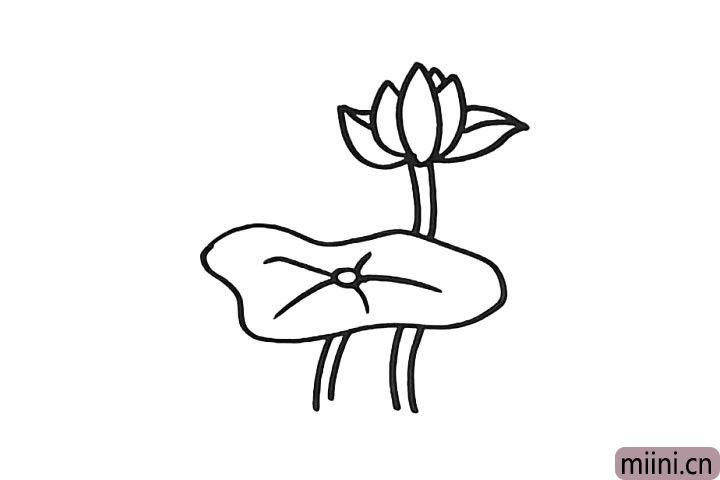 4.在茎的顶端画一朵漂亮的荷花.仔细观察形状。