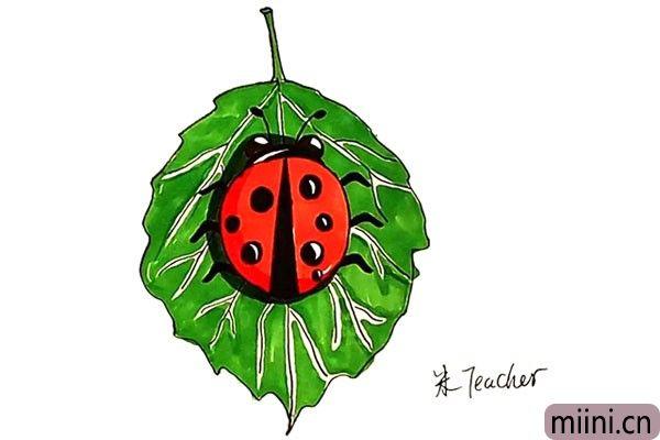 趴在树叶上的七星瓢虫简笔画步骤教程