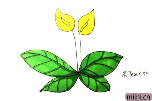 很美丽的马蹄莲简笔画步骤教程