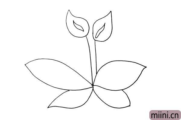 第六步:同样的画法在下方再画出二片小一点的叶子。
