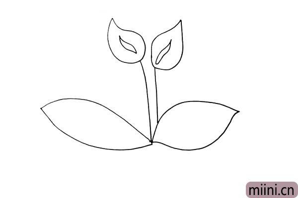 第五步:接着在茎的下方画出它大大的叶子.