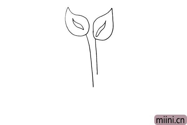 第四步:在花朵的下方我们画出它细细的茎。