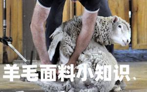 关于羊毛面料的知识,学会了,可以解决很多麻烦